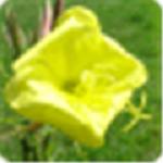 Alternate Splitter最新版下载|Alternate Splitter(文件拆分合并工具) V1.810 绿色破解版下载