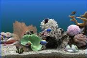 热带鱼屏保免费版下载-热带鱼屏保汉化版下载